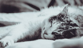My lovely cat Royalty Free Stock Photos