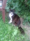 My lovely pet. Cat, kitty, kitten royalty free stock image