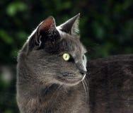 My loving cat Stock Image