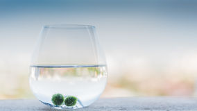 My marimo Royalty Free Stock Image