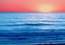 My middle daughter enjoying the cool ocean water at sunset in LA. Caught my daughter as the solitary figure swimming in the ocean at sunset...a dream of hers stock images