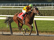 My Miss Aurelia Wins The Frizette Stakes Stock Photography