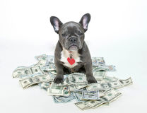 My Money! Royalty Free Stock Image