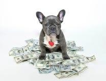 My Money! Royalty Free Stock Image