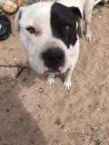 My dog. My new dog spawn Stock Image