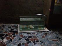 Fish tank. My new fish tank made at home by me Royalty Free Stock Photos
