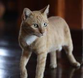 My Orange cat stock images