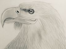 My painting with pencil royalty free stock photography