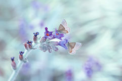 My personal dream. Close-up shot of a beautiful butterfly on a flower with Stock Photos