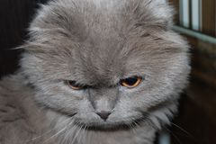 My pet is my cat. My cat does not like to be photographed. he usually looks like when I pick up a camera Stock Photo