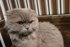 My pet is my cat. My cat does not like to be photographed. he usually looks like when I pick up a camera Stock Photography