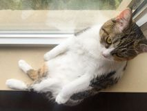 My pet cat. Huahua had a rest on the windowsill Royalty Free Stock Photography