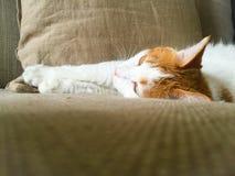 My pet cat. Yanyan lay on the sofa comfortably Royalty Free Stock Image