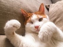 My pet cat. Yanyan lay on the sofa, and winked to us Royalty Free Stock Photos