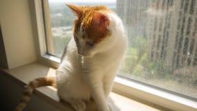 My pet cat. Yanyan oversaw the bed Stock Photo