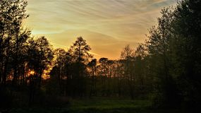 Landscape of polish meadows in the spring. My photo shows a landscape of polish meadows and trees during spring evening stock image