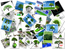 My pictures of trees Royalty Free Stock Photo