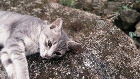 My Pretty Kitty Cat Sleeping. Its My pet sleeping Outdoor. Int it cute stock photography