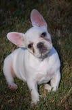 My puppy Royalty Free Stock Photos