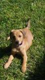 Sun loving pup. My puppy sun bathing in the grass Stock Photo