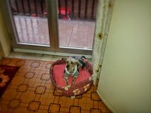 My puppy Stock Photo