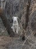 Whiskey& x27;s Forest. My puppy whiskey watching me in the trees stock photo