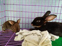 My rabbit and little cute rabbit royalty free stock photo