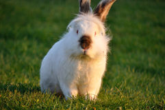 My rabbit Stock Images