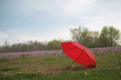 My red umbrella purple field Stock Photo