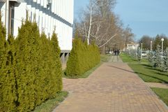 My region in the settlement of city type. In December, the Sunny weather, the street is tiled and planted with ornamental trees. The building of the local Royalty Free Stock Photo