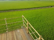 My Rice field royalty free stock photos