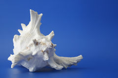 My seashell 3 Royalty Free Stock Photography