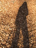 My shadow. And brown leaves royalty free stock photos