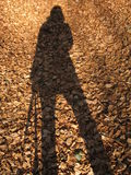 My shadow. And brown leaves royalty free stock images