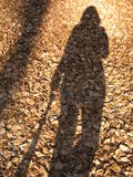 My shadow. And brown leaves stock images