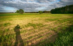 My shadow on the field 2. Dark sky, clouds, young corn on the field, and shadow on the edge of the field of man Royalty Free Stock Photos