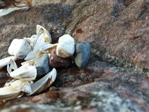 My shell collection with colored pebbles on the beach royalty free stock images