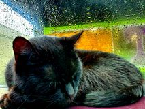 My Sleeping Furr Baby royalty free stock images