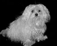 My small dog Stock Photos