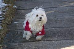 My small dog Royalty Free Stock Image