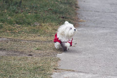 My small dog Royalty Free Stock Photo