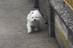 My small dog Stock Photo