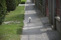 My small dog Stock Image