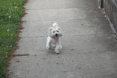 My small dog Royalty Free Stock Photos