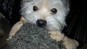 My Stuffed animals royalty free stock photography