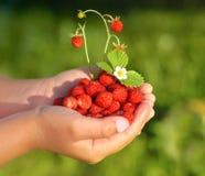 My summer fruit Royalty Free Stock Photo