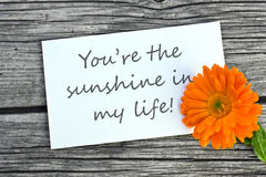 My sunshine. White card with lettering You are my sunshine and orange marigold Royalty Free Stock Photo