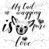 My tail wagging is pure love. Royalty Free Stock Image