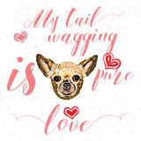 My tail wagging is pure love. Royalty Free Stock Photography