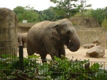 Zoo Stock Photography
